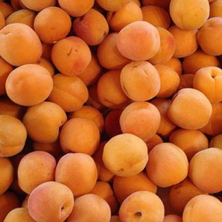 Abricot - 12