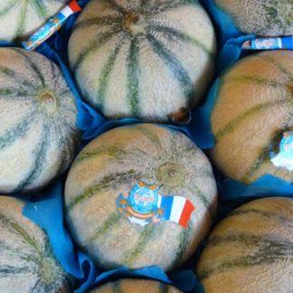Melons Philibon Sénégal